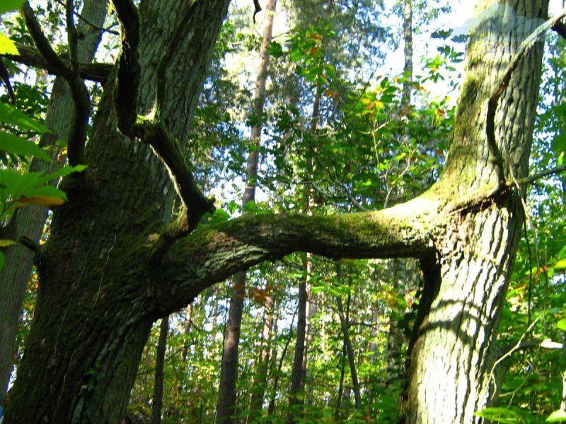 arbres-marier